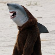 shark dressed man